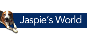 Jaspies-world-596x300-300x151