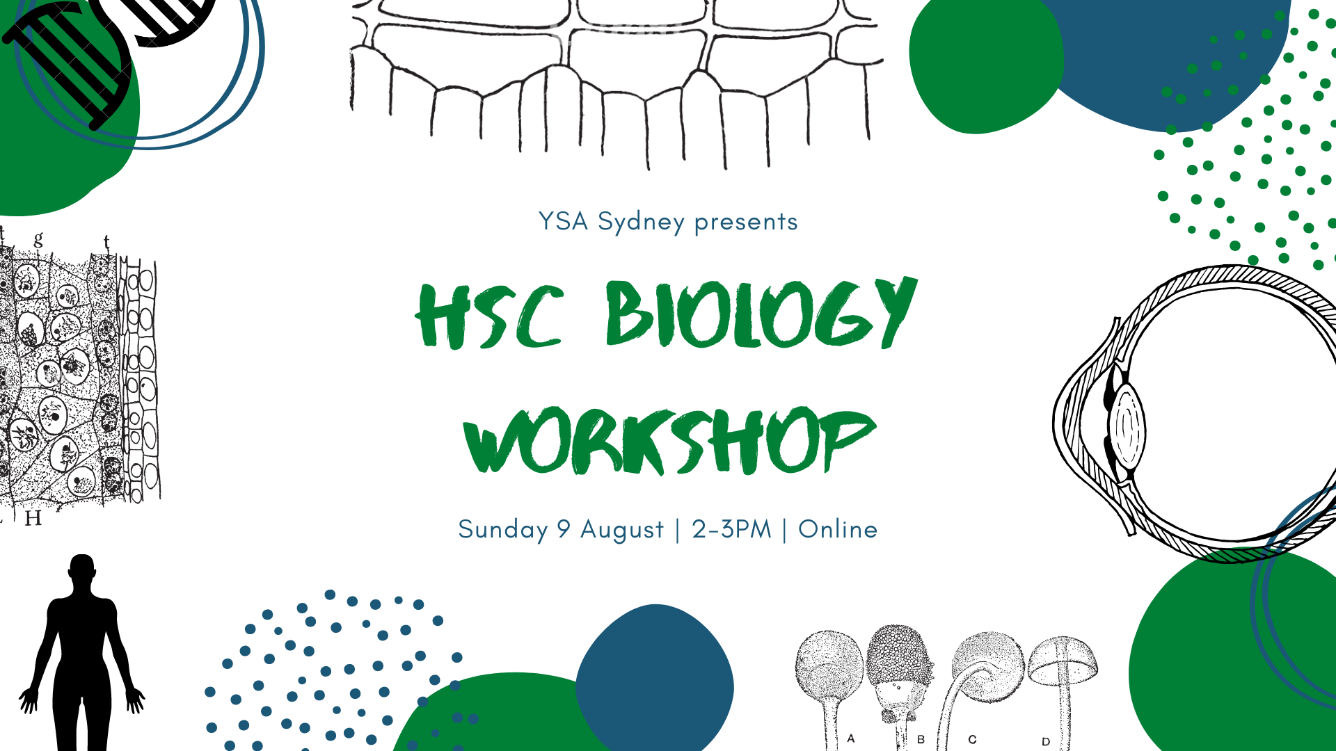 YSA HSC Biology Workshop